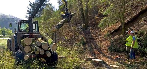 ยางที่ใช้ในอุตสาหกรรมป่าไม้ (Forestry Tire) ยางรถเก็บเกี่ยว (Harvester Tire)